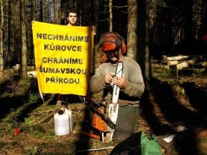 Na Šumavě se sešlo 200 zastánců kácení, dřevorubcům nesou borůvkové koláče