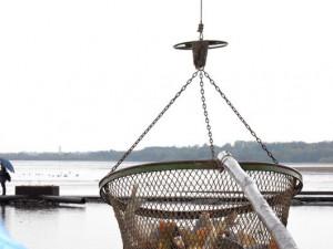 Rybářské slavnosti ozdobí výlov Munického rybníka