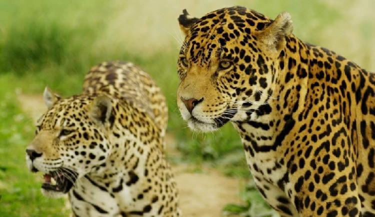 Zoologická zahrada v Táboře zůstává otevřena