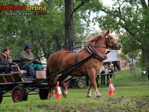 Vědci zjistili, že původní barva divokých koní byla hnědá