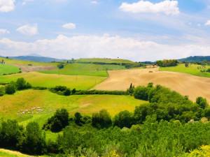 Jihočeský trh s půdou je atraktivní, lidé přitom často nevědí, že pozemky vlastní