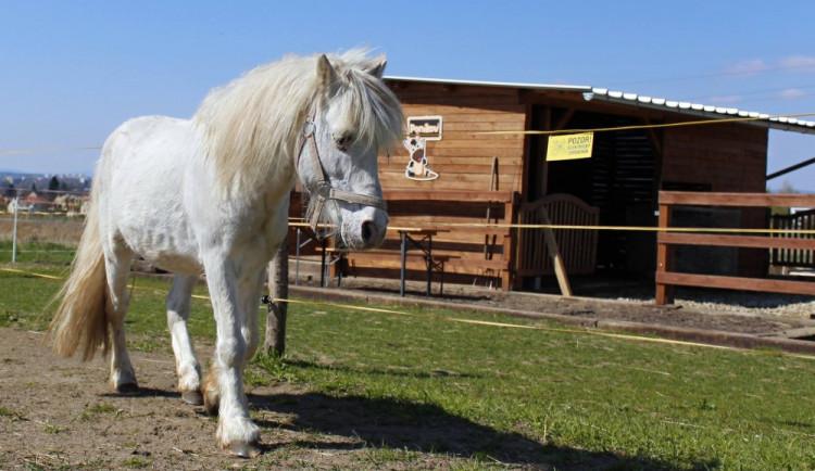 Jaký bude osud poníků z Poníkova?