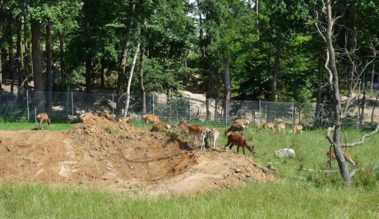 Táborská zoo po půlroce obnoví provoz, vstup je zdarma