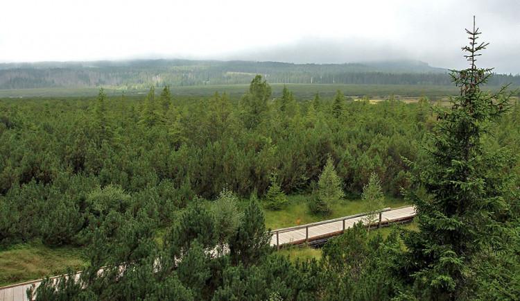 Dubnový orkán Niklas na Šumavě poničil přes 35 tisíc kubických metrů dřeva