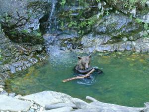 Medvěd Petr Vok odešel do věčných lovišť, dožil se 31 let