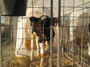 SVOBODA ZVÍŘAT: Proč se na vegany či vegetariány díváme jako na pomatence?