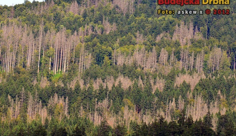 Po orkánu Kyrill napadl kůrovec v Národním parku Šumava miliony stromů