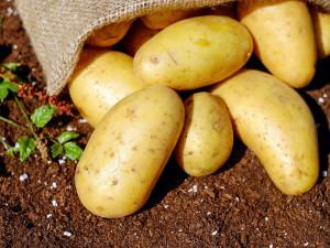 DRBNA VĚDÁTORKA: Dočkáme se sklizně brambor na Marsu?