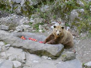 V Českém Krumlově utratili medvědici Kateřinu
