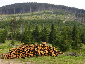 Sucho a škůdci nutí více těžit dřevo. V Jihočeském kraji přesto dochází k největší obnově lesa