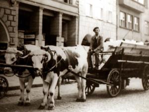 DRBNA HISTORIČKA: Volský potah na náměstí