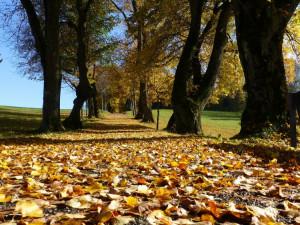 Astronomické léto vystřídá podzimní rovnodennost. I tak se ale vrátí slunečné počasí