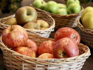 Výstava ovoce letos nabídne okolo tří stovek exponátů