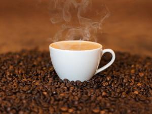 Exkurze do světa kávy. Šálky do střehu!