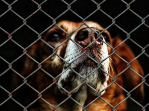 Dobrovolnice pořádá  v Českých Budějovicích již třetí charitativní bazar pro týraná zvířata
