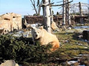 VIDEO: V zoo v Hluboké nad Vltavou se narodilo mládě medvěda plavého