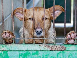 Na třetím charitativním bazaru pro týraná zvířata se vybralo přes 150 tisíc korun