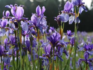 Červnové Lipensko je vjednom květu. K vidění jsou vzácné druhy rostlin