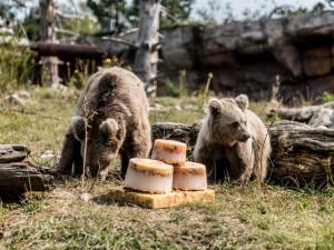 VIDEO: Hlubocká zoo pokřtila mládě medvěda plavého. Dostalo jméno Nochunsafed