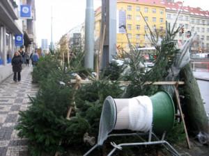 Velká letní vedra a sucho nesníží produkci vánočních stromků