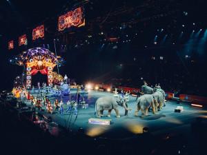 Petici proti chovu zvířat v cirkusu podepsalo 14 tisíc lidí