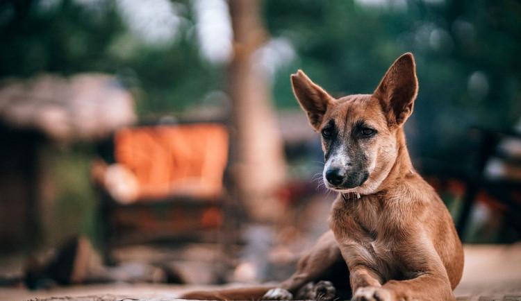 U Sportovní haly budou zadarmo očkovat psy lidí bez domova