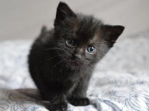HLEDÁME PÁNÍČKA: Čokoláda je černé kotě, které vám smůlu nepřinese
