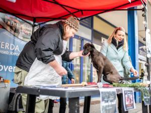 """VIDEO: Na Lannovce se """"prodávalo"""" psí maso. Aktivisté upozorňují na paradox zabíjení kaprů"""