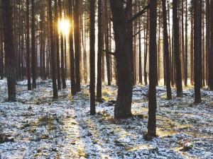 Na Silvestra bude nad nulou, ochlazení jako před 40 lety nepřijde