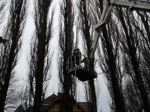 Kvůli popadaným stromům bylo dopoledne několik stovek domácností bez proudu
