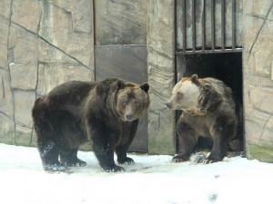 Medvědí bratři Ben a Dick z hlubocké zoo oslavili třicátiny