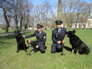 V anketě Statečné psí srdce letos bodovali němečtí ovčáci, ocenění putovalo do Strakonic a Jindřichova Hradce