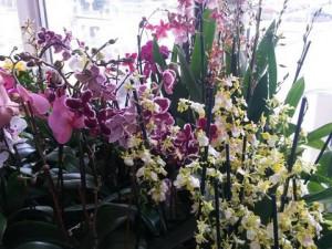 SOUTĚŽ: Metropol znovu ozdobí prodejní výstava orchidejí a exotických rostlin