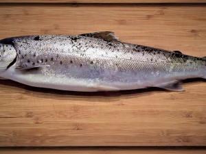 Do Česka se dostaly ryby se zakázanou látkou. Zpracovávali je v Třeboni