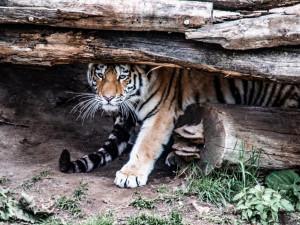 VIDEO: Zoo na Hluboké oslavila narozeniny. Nechyběl Adolf ze Schwarzenbergu nebo hejtmanka