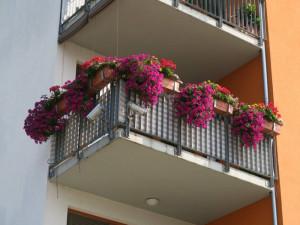 Balkony a okna plná květin jsou v Budějcích pastvou pro oči. Začíná soutěž Rozkvetlé město
