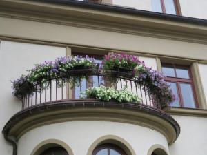 Zapojte se do soutěže Rozkvetlé město. Vaše květiny vám mohou vydělat několik tisíc korun