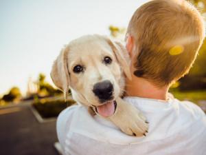 Češi za svého psa utratí v průměru téměř 16 tisíc za rok