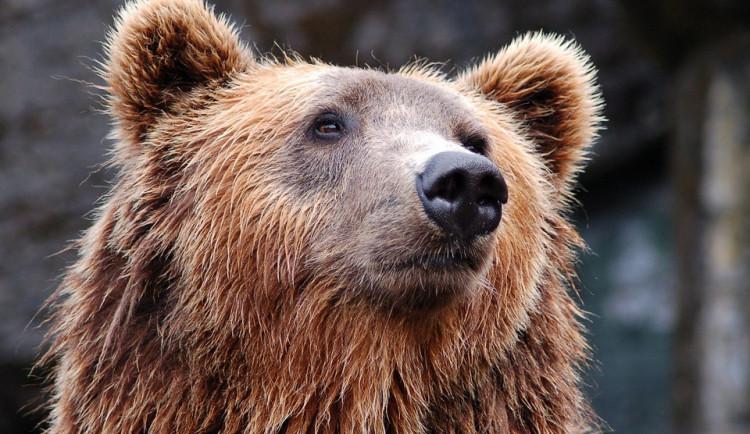Propašovaní medvědi, kteří neměli dovozní povolení, našli nový domov v Krumlově