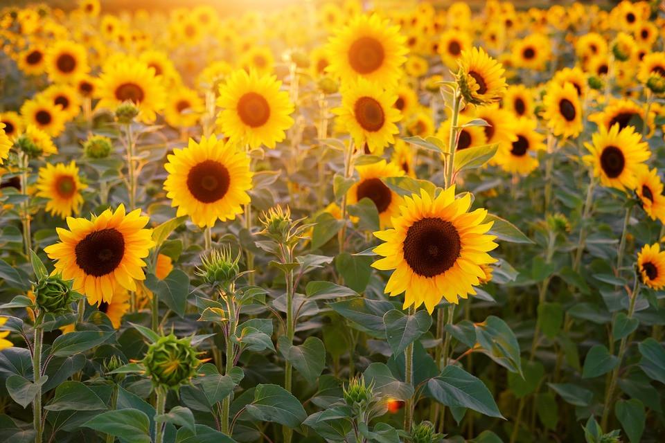 Do konce srpna teploty pozvolna klesnou, v září se slabě oteplí | Společnost | Zprávy | Budějcká Drbna - zprávy z Českých Budějovic a jižních Čech