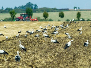 Zemědělci i nadále nebudou moci plošně používat jed proti hraboši