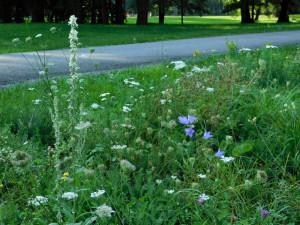 Květnaté pásy v Českých Budějovicích hostí i ohrožené druhy hmyzu