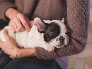 Pravidla pro chov psů se asi opět zpřísní