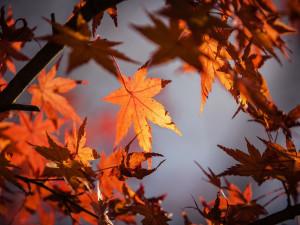 Končí astronomické léto, nastává podzimní rovnodennost