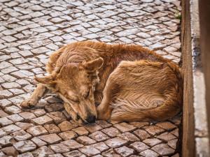 Lidé bez domova si budou moct nechat zdarma naočkovat a odčervit psy