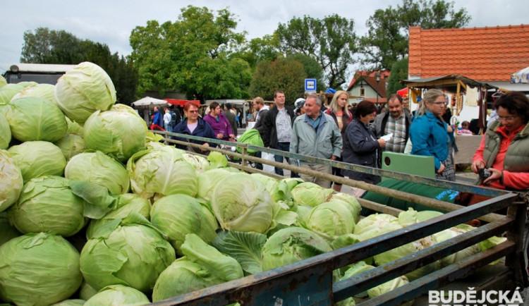 Zelnobraní ve Vidově nabídlo první kysané zelí z letošní úrody