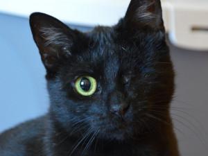 HLEDÁME PÁNÍČKA: Tři mladé kočičí slečny hledají nový domov