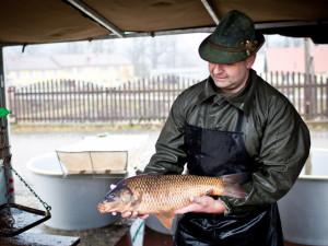 Třeboňští rybáři čekají na podzim 2 400 tun ryb, ceny drží loňské