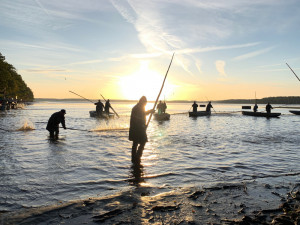 VIDEO: Začal výlov Rožmberka. Rybáři čekají 150 tun ryb, jako loni