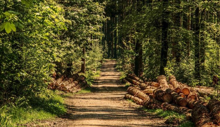 Cisterciáci z Vyššího Brodu propustí lesníky, zbude 235 hektarů lesa